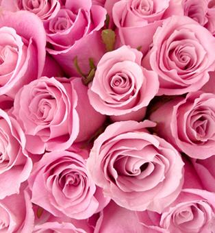 Лепестки роз во время секса